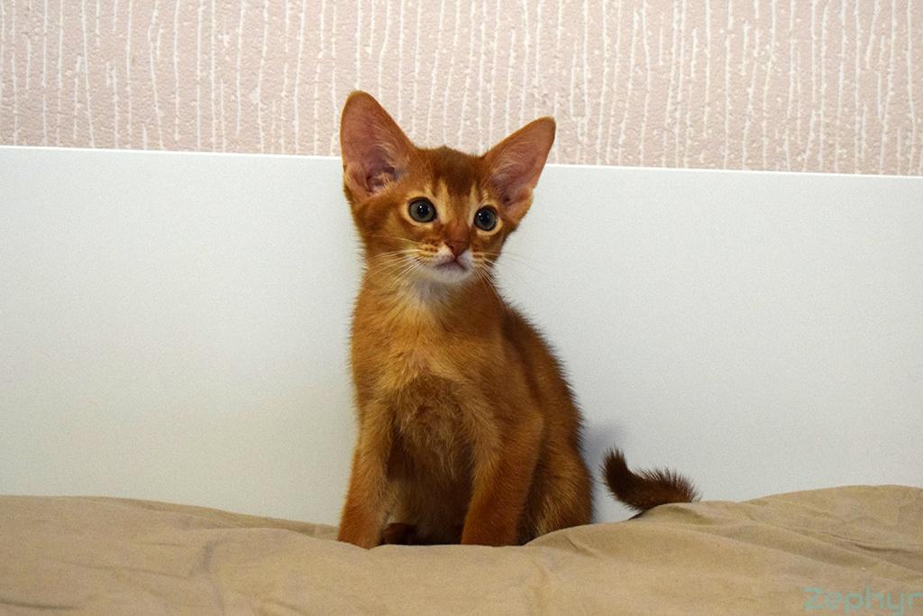 Картинки кошки ягуар графика свифт